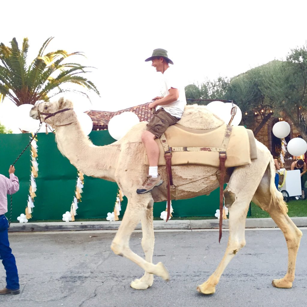 a man riding a live camel on a street with palm trees and balloons